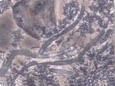 20080113203342.JPG